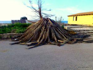 Кущи из пальмовых листьев