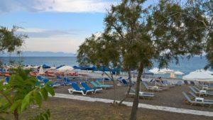На пляже Элли есть деревья и кустарники