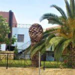 Платаньяс, стриженная пальма