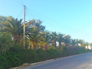 Платаньяс, пальмовая аллея