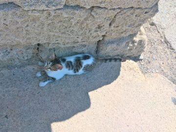 Котик прячется от жары